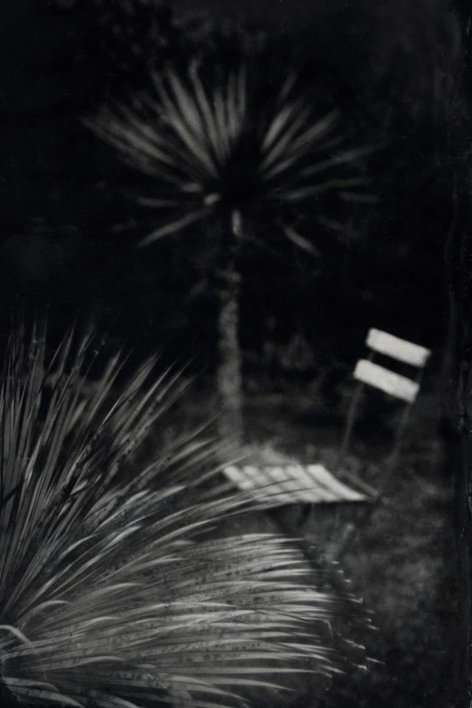 Les Yuccas - Ambrotype